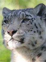 snowleopard De første skjermbildene av Mac OS X 10.6   Helt lik 10.5
